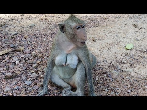 Poor mom monkey calls her baby monkey after baby gone away