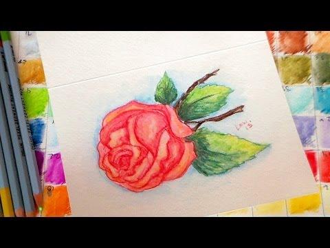 vintage rose watercolor pencil tutorial - YouTube