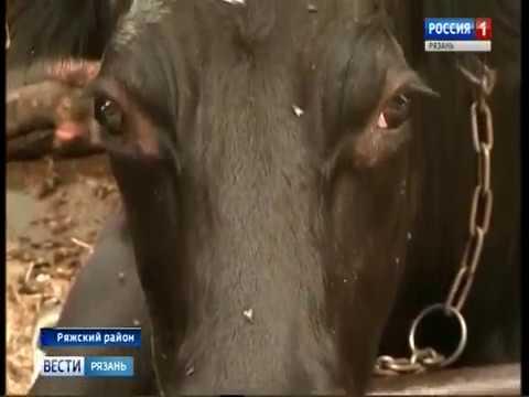 В Рязанской области растет производство молока