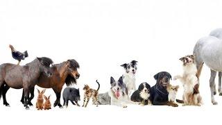 Домашние животные в Австрии - разбираем закон о защите животных (Tierschutzgesetz)