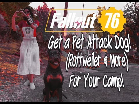 Fallout 76 You Can Get A Pet Dog! (Rottweiler & More) For Your Camp!