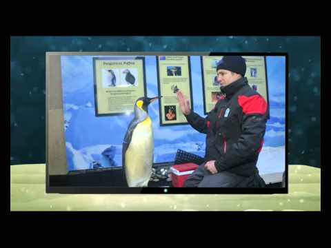 Penguin Training at Ski Dubai