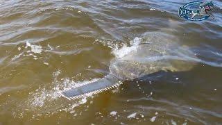 Biggest Fish Ever Sawfish  - Shark Fishing Caught Rare Fish - Fishing Big Fish!!! - Fish Catches