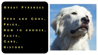 Great Pyrenees. Pros and Cons, Price, How to choose, Facts, Care, History