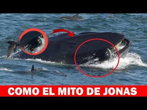 CAPTADO EN VIDEO: Una ballena se tragó a un buzo y luego lo devolvió cerca de la costa