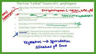 Clostridia Perfringens