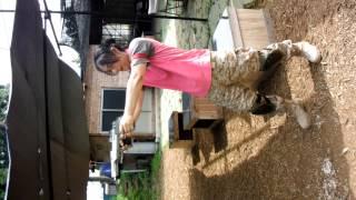 東京マルイ製のデザートイーグルを私のと友人ので2丁拳銃してみました。...