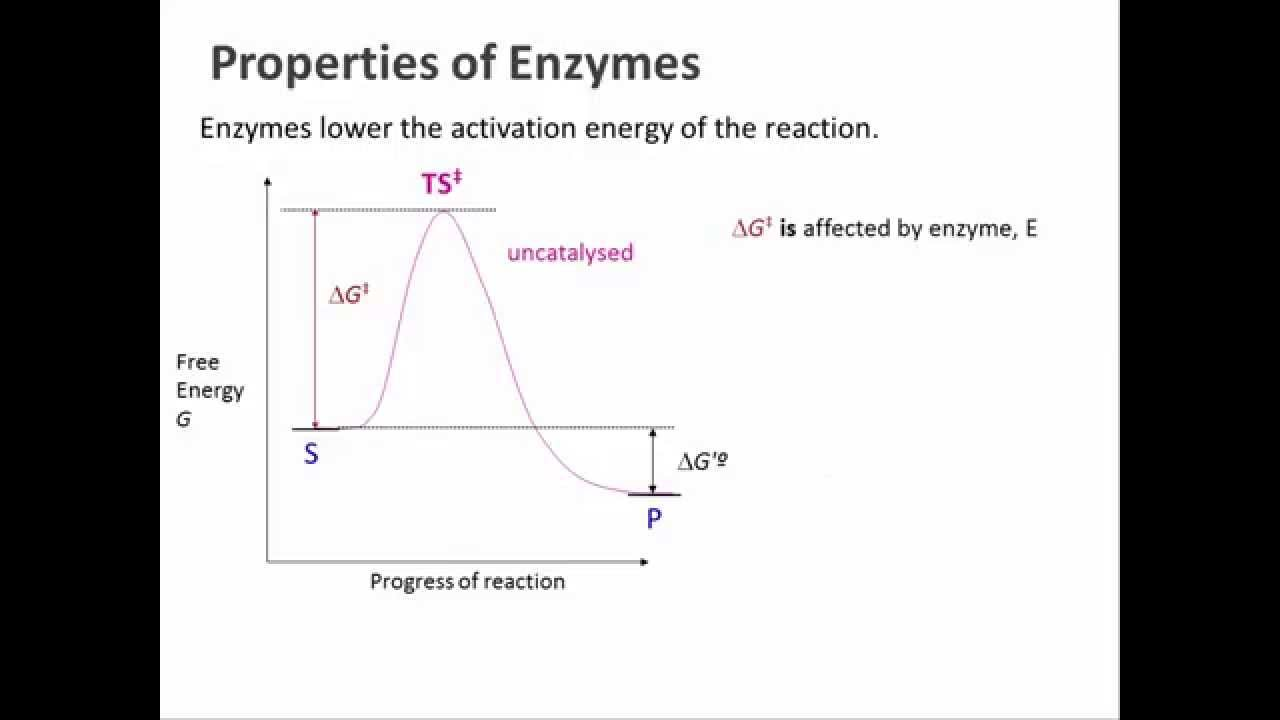 an introduction to the analysis of enzyme An introduction to elisa the enzyme-linked immunosorbent assay, also known by the acronym, elisa, was created in the 1970s this common lab test measures the concentration of an analyte, which is generally antibodies.