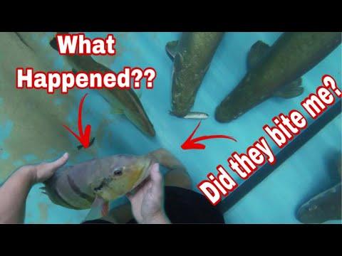UNDERWATER FEEDING! What HAPPENED To My Huge TEMENSIS PEACOCK BASS??? ARAPAIMA, PIRAIBA, JAU CATFISH