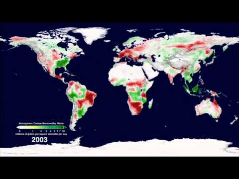 Plant Productivity in a Warming World