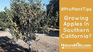 Growing Apples in Southern California? | Trial Results Low Chill Hours Test | #ProPlantTips