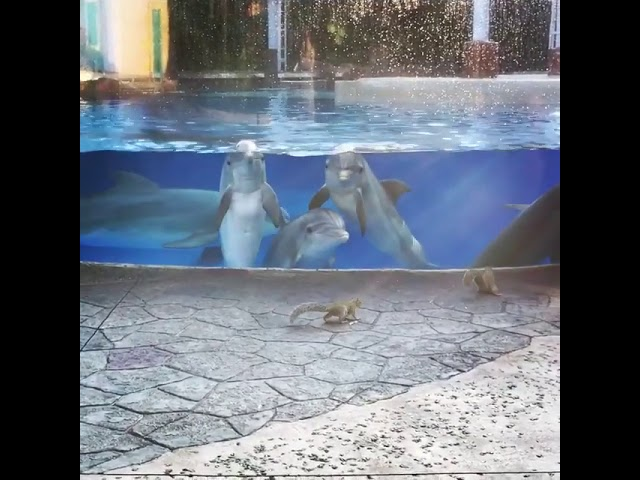 Dolphins watching squirrels