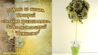 Поделки из шишек. Топиарий «Зеленые хризантемы». Видео экотопиарий