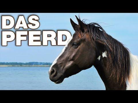 Das Pferd - Anatomie und Biologie   Alternative Fakten fürs Referat ...