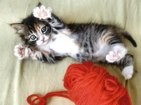 Image result for cats at play