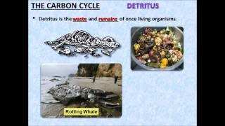 The Carbon Cycle PowerPoint - Tangstar Science