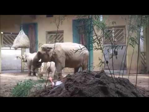 Beschäftigung für die Osnabrücker Elefanten