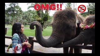 THE ELEPHANT SLAPPED ME!!   AALIYAHJAY