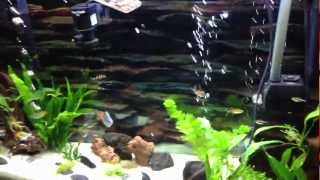 Freshwater Aquarium With Turtles Live Plants Week 3
