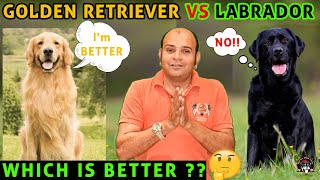 Golden Retriever vs Labrador Puppy Dog Breed Comparison in Hindi | Which is Better? Baadal Bhandaari