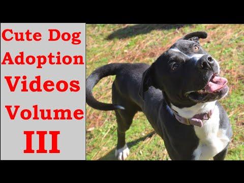 cute-dog-adoption-videos-volume-iii