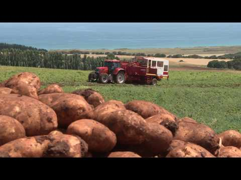 J.R. Simplot Company: Cultivating a World of Possibilities
