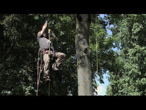 Linzer Baumforum, Gunther Nikodem