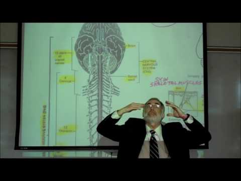 THE NERVOUS SYSTEM; ORGANIZATION & TYPES OF NEURONS; PART 1 by Professor Fink