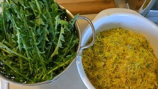 Dandelion Wine 101 part 1~Easy Home Brew!
