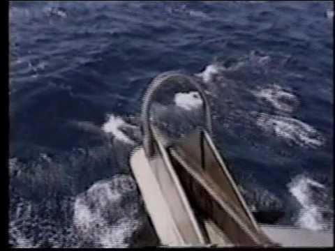 Channel island 1998 2