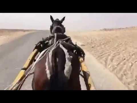 Giza Gizeh, horse carriage