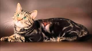 Кельтская кошка - истинная охотница