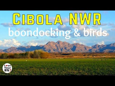 Camping and Bird Watching at Cibola National Wildlife Refuge