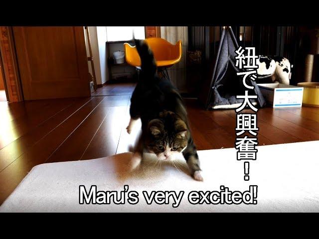 紐で荒ぶるまる-maru-is-excited-at-the-string