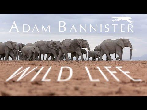Daniel Rutland Manners - Adam Bannister Wildlife Showcase