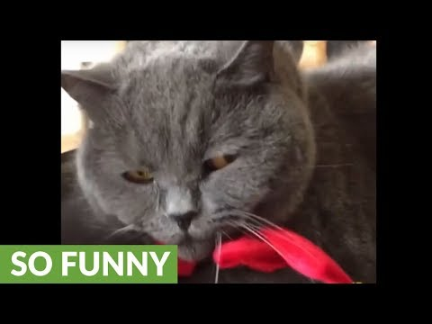 Cat doesn't like being disturbed by annoying owner