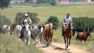 Лошади Терского конного завода