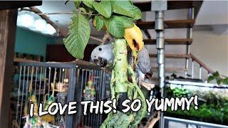 A Cookbook For Parrots?? | Vlog #288