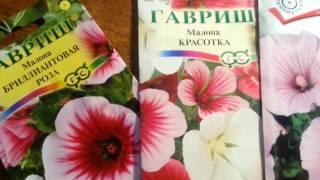 Что из цветов можно посеять прямо в открытый грунт