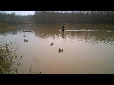 WV Goose Hunt 2010