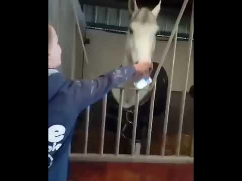 Лошадь утащила смартфон.
