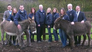 The Donkey Sanctuary calls for carefully considered changes to agricultural subsidies in Ireland