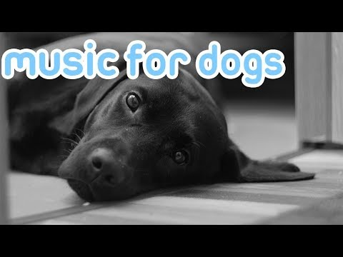 Relax My Dog with Music! Songs Help Your Dog Sleep, Reduce Anxiety, Stress, Hyperactivity!
