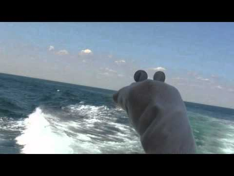 Cape May NJ Whale Watching