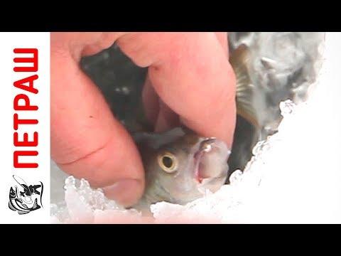 зимняя рыбалка видео - 2016-12-18 15:00:34