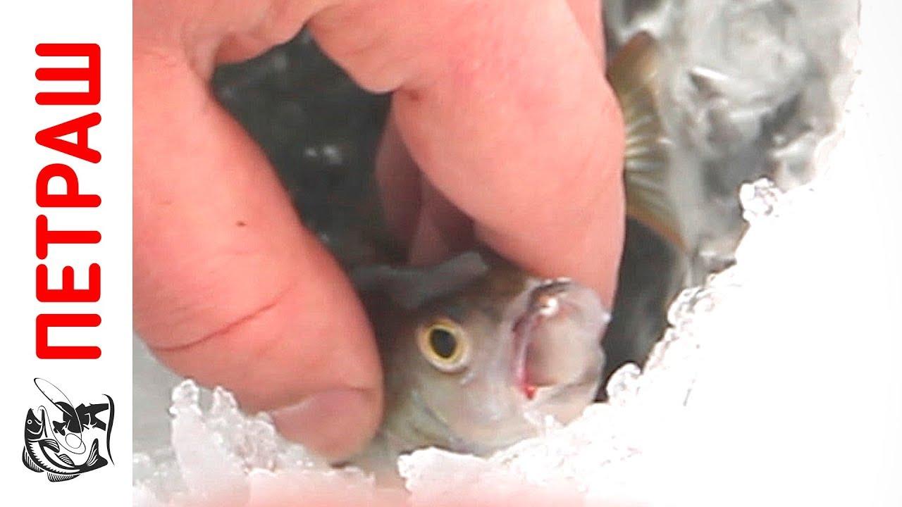 Ловля щуки на жерлицы. Рыбалка в Казахстане, река Ишим. - YouTube