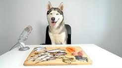 ASMR Husky Reviewing Raw Fish Parts!