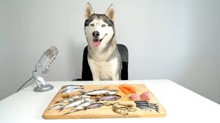 ASMR Husky Reviewing Raw Fish Parts!