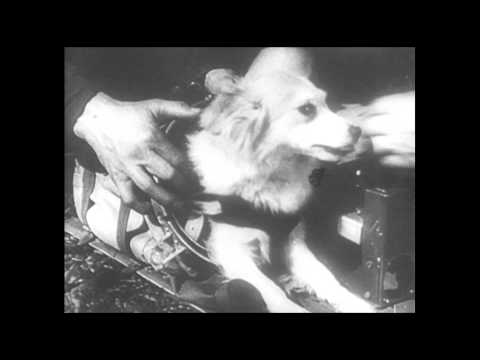 The Russians Sent Dogs Into Space to Die
