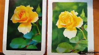 Рисуем розу - ускоренный урок из платного видео курса